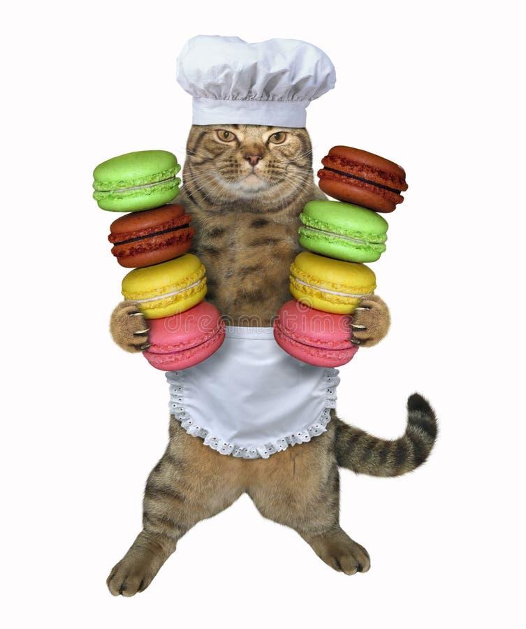 Kota kucharz trzyma dwa sterty ciastka ilustracji