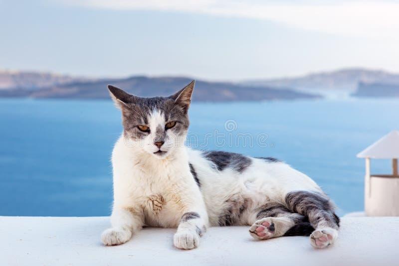 Kota lying on the beach na kamiennej ścianie w Oia miasteczku, Santorini, Grecja morze egejskie fotografia stock