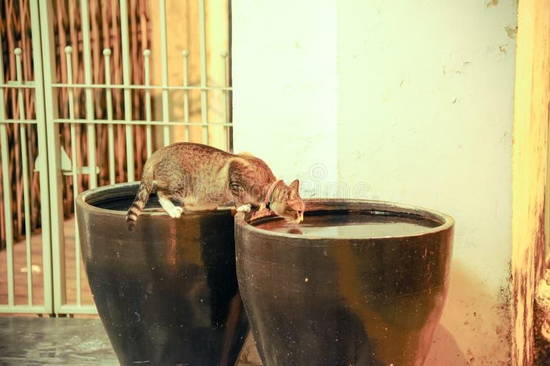 Kota napoju woda w wazie fotografia stock
