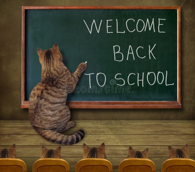 Kota nauczyciel przy blackboard 1 ilustracja wektor