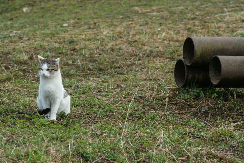 Kota obsiadanie na trawie metal drymbami fotografia stock