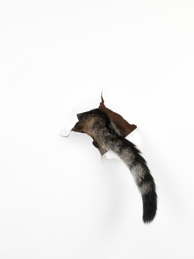 Kota ogon przez dziury w białym papierze zdjęcia stock