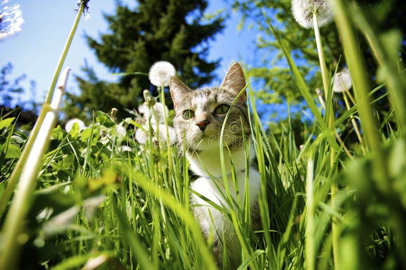 kota ogród zdjęcie stock