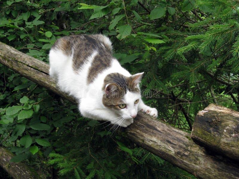 Download Kota ogrodzenie zdjęcie stock. Obraz złożonej z polowanie - 25202648