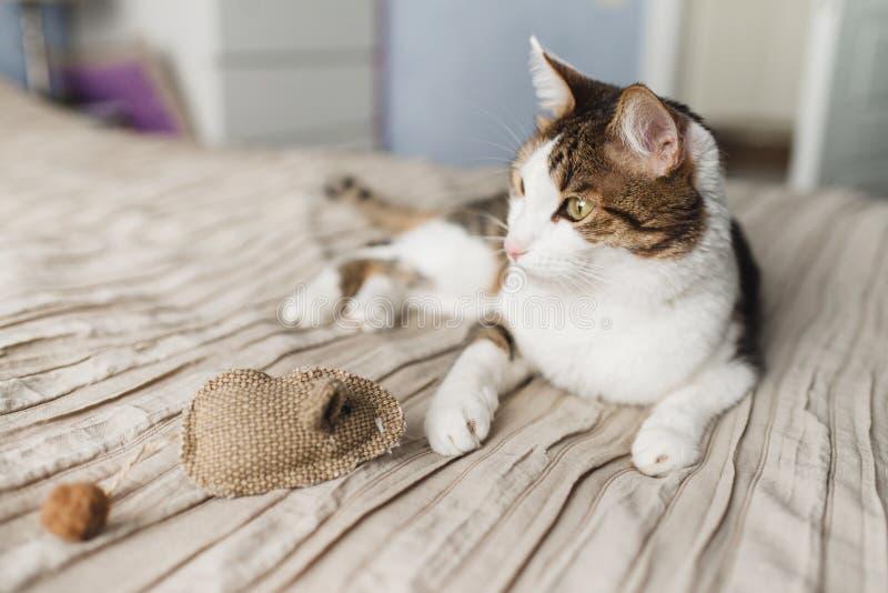 Kota pasiaści dorosli kłamstwa na łóżku i bawić się zabawkarskiej myszy fotografia royalty free
