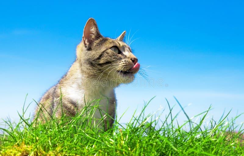 kota portait śliczny plenerowy fotografia stock