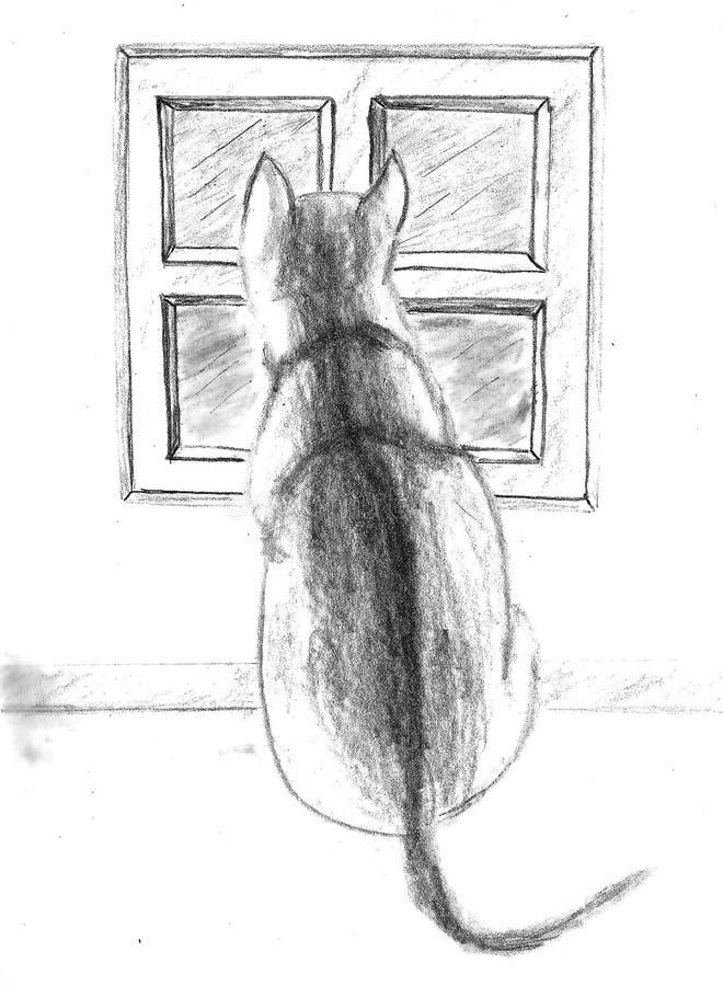 Kota przyglądający outside zdjęcie stock