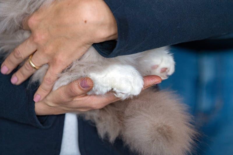 kota ręki istoty ludzkiej łapa fotografia stock