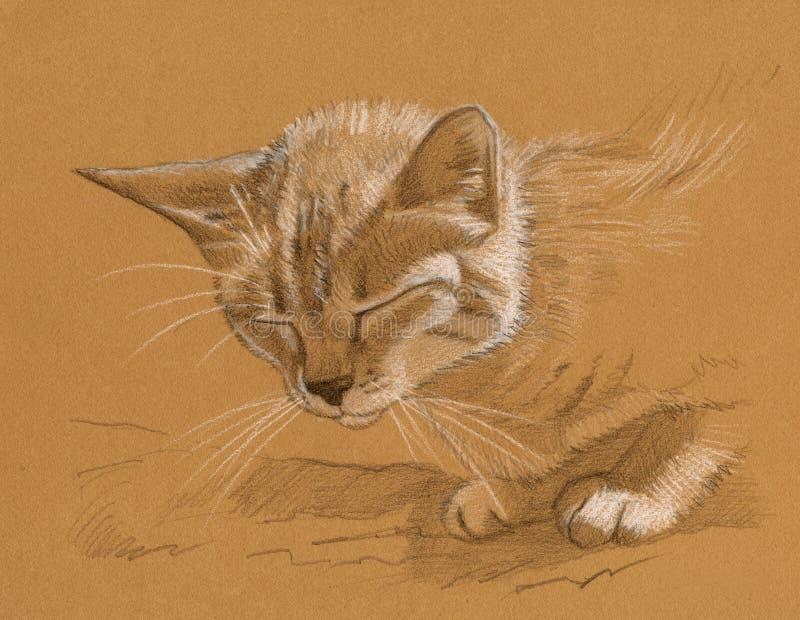 kota rysunek ilustracji