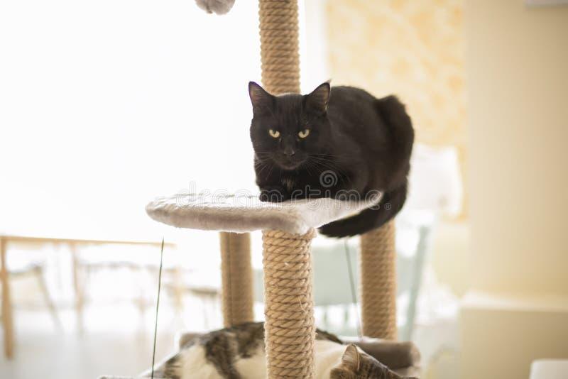 Kota sen na wierza dla kotów obrazy stock