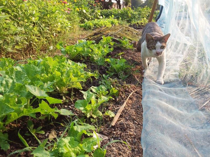 Kota spacer w jarzynowym ogródzie obrazy stock