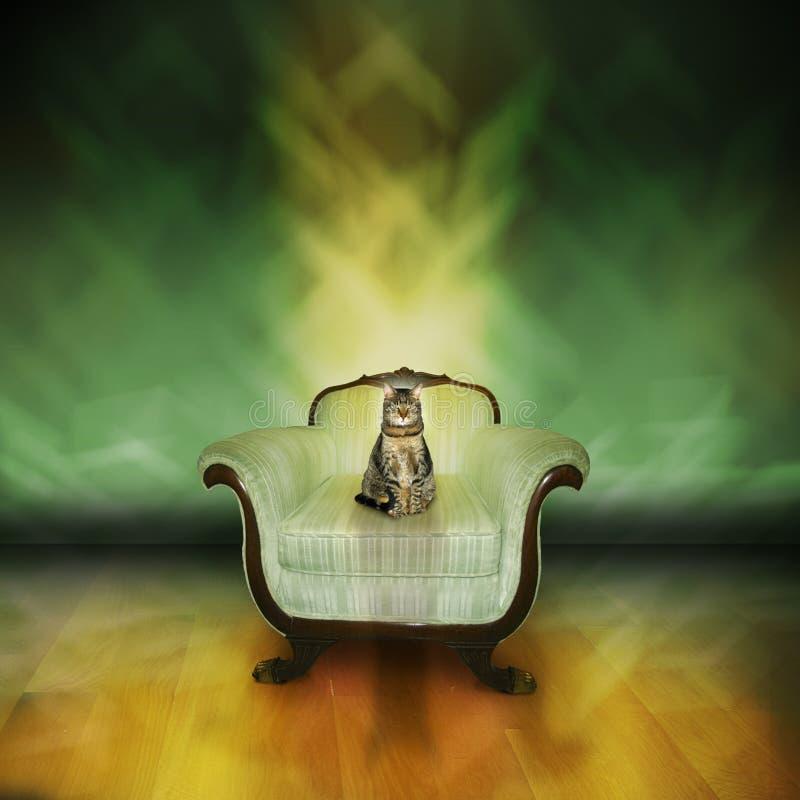 Download Kota tabby obraz stock. Obraz złożonej z krzesło, zwierzę - 6695003