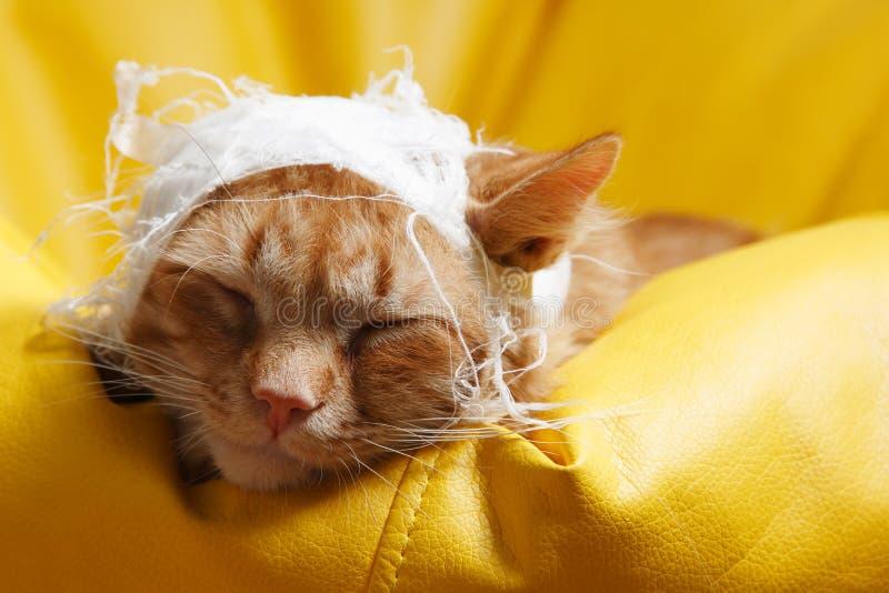 Kota ucho obolałość z bandażem zdjęcia royalty free
