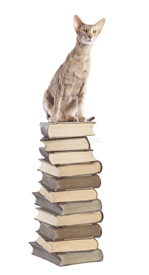 kota wierzchołek zdjęcie royalty free