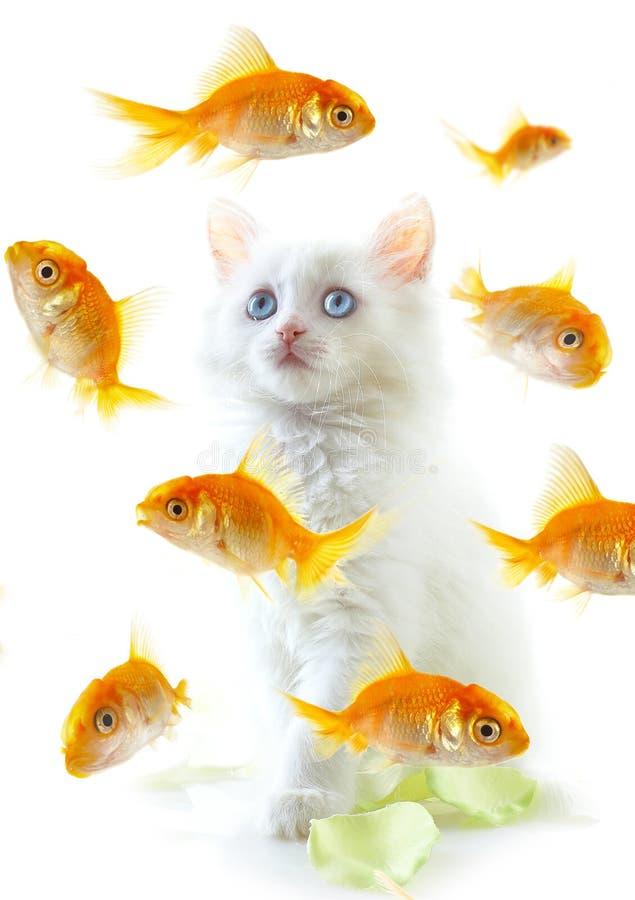 kotek ryb zdjęcie stock