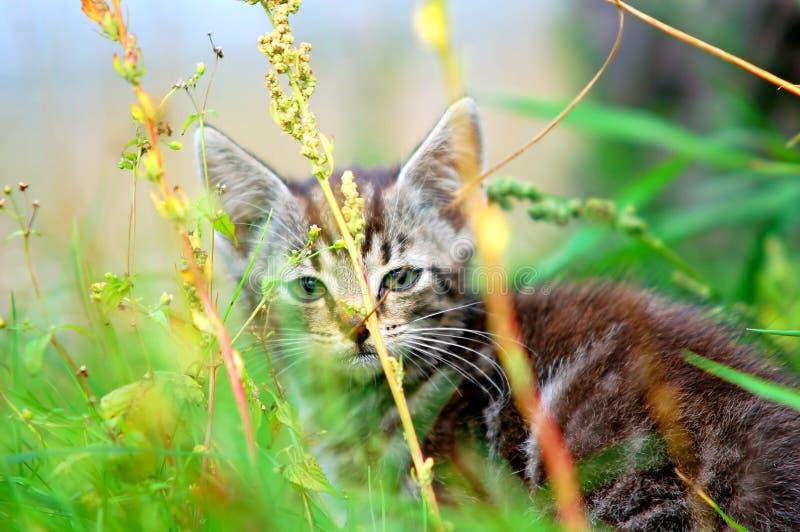 kotek trawy zdjęcie royalty free