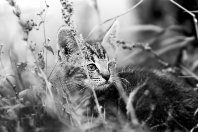 kotek trawy obraz royalty free