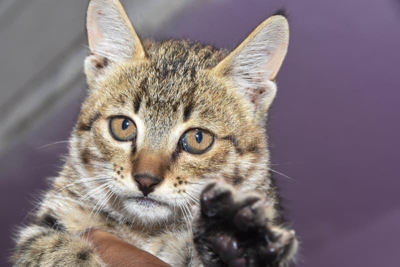 Kotek złapany na kamerze obrazy stock