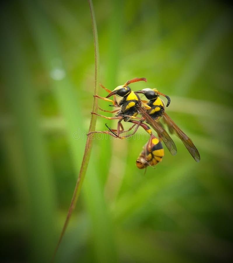kotelnia koloru żółtego pszczoła obraz royalty free