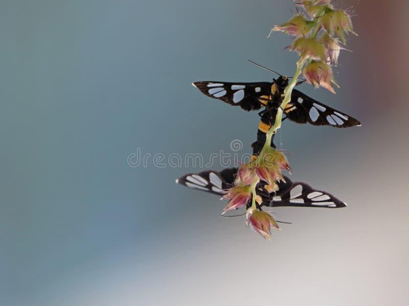 Kotelnia motyle obraz royalty free