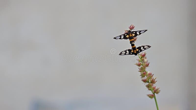 Kotelnia motyle fotografia stock