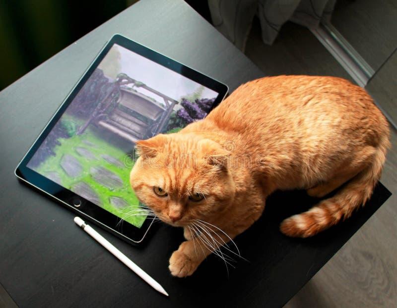 Kotik inoltre vuole disegnare Progetto di architettura del pæsaggio fotografia stock