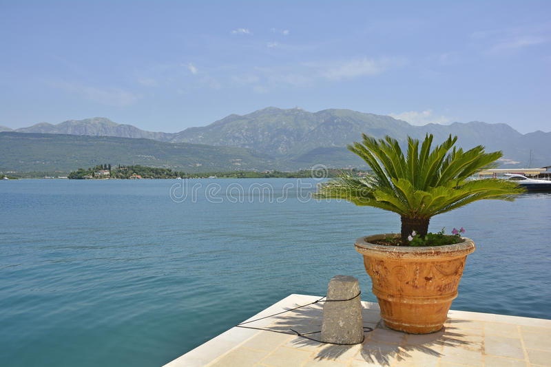 Kotor Bay. A palm plant looks out over Kotor Bay, Montenegro royalty free stock photos