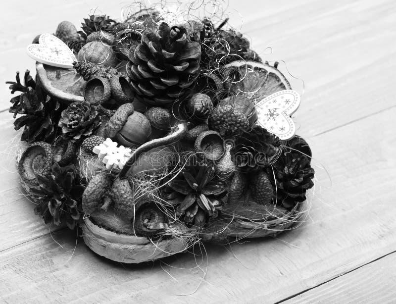 Kottar för granträd, muttrar, ekollonar och torra citrurs i sammansättning arkivbilder
