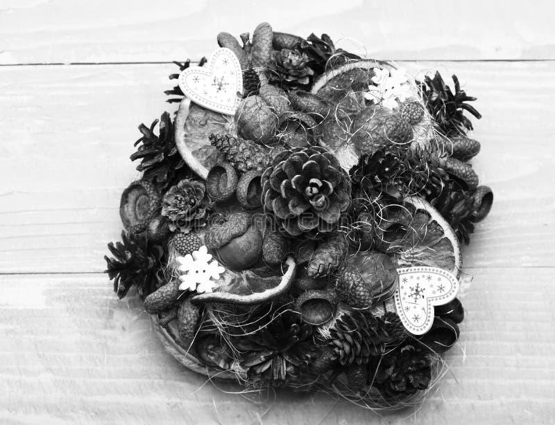 Kottar för granträd, muttrar, ekollonar och torra citrurs i sammansättning royaltyfria bilder