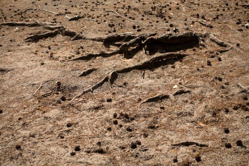 Kottar och rotar på jordningen fotografering för bildbyråer