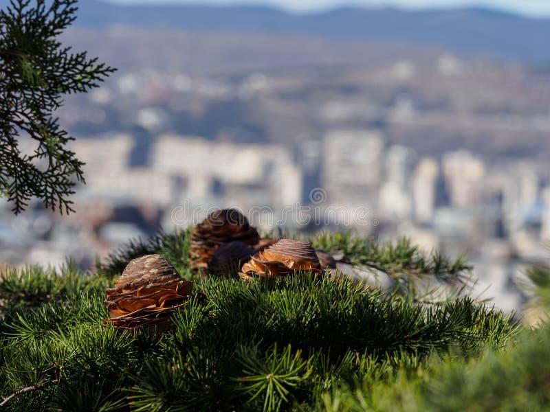 Kottar på bakgrunden av staden royaltyfria bilder
