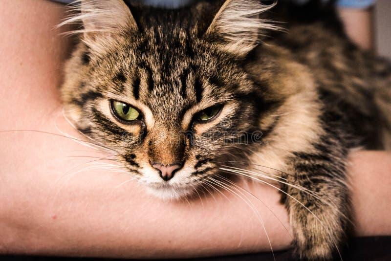 Koty obraz royalty free