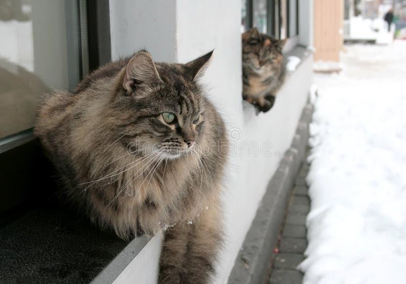 koty bezdomni fotografia stock