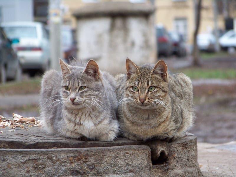 koty dwa zdjęcia royalty free