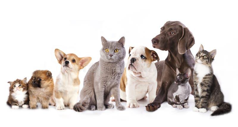 Koty i psy fotografia stock