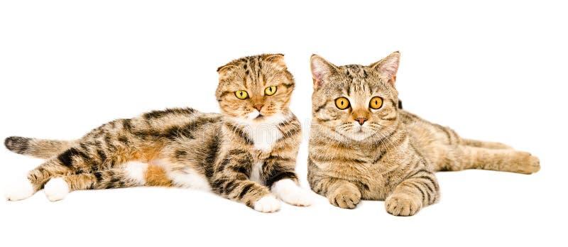 Koty kłama wpólnie fotografia royalty free