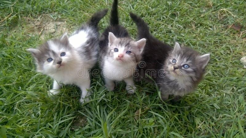 Koty na trawie obraz stock