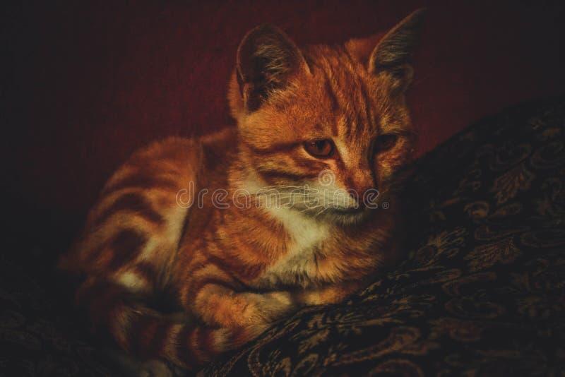 Koty są życzliwymi i czystymi zwierzętami dla ludzi zdjęcie stock