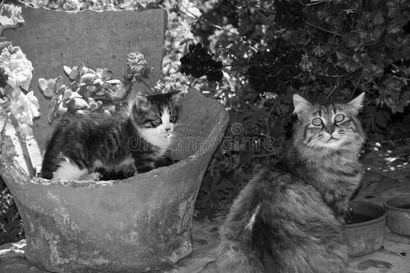 koty słodcy zdjęcia royalty free