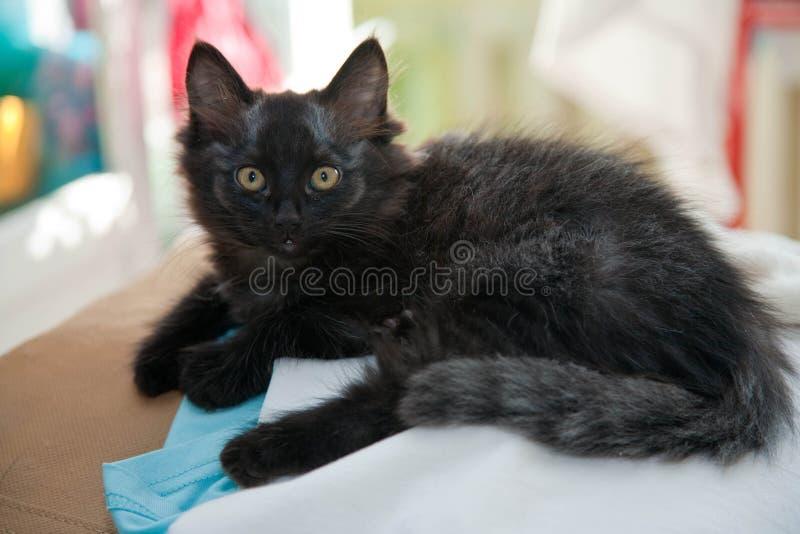 koty szczęście Figlarka cztery miesiąca obrazy stock