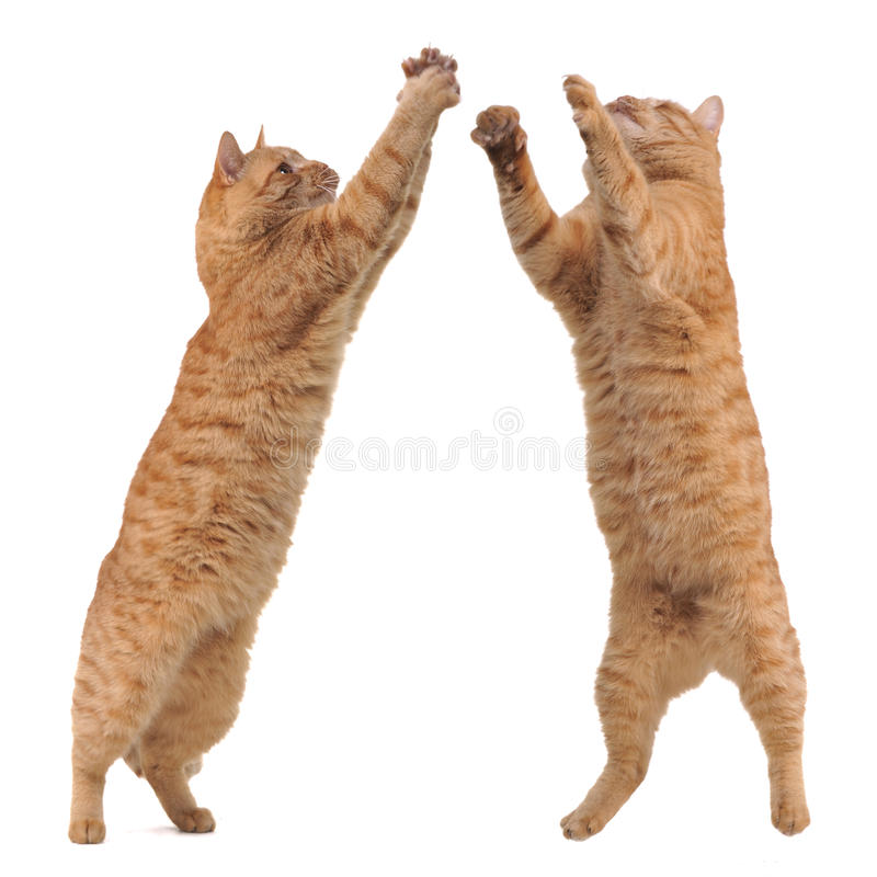 koty target5034_1_ zabawkę dwa zdjęcia stock