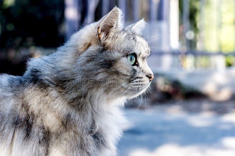 koty uroczy fotografia stock