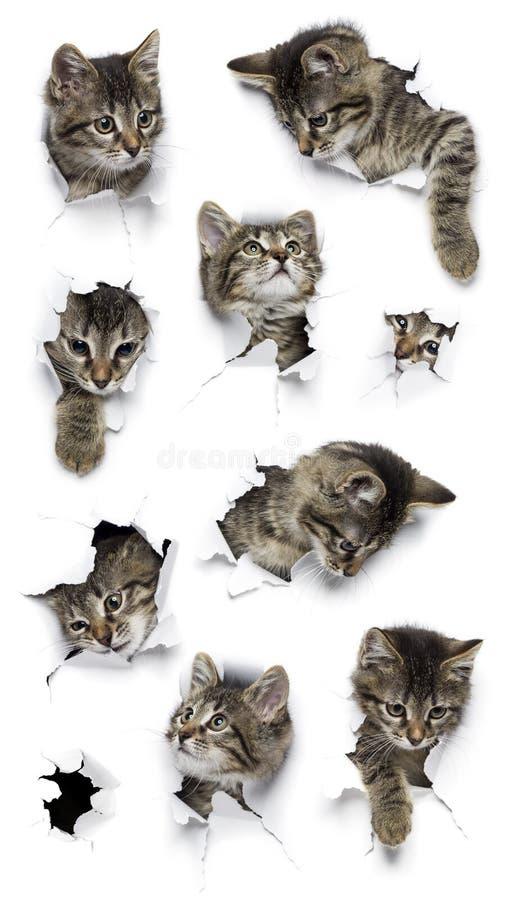 Koty w dziurach papier fotografia stock