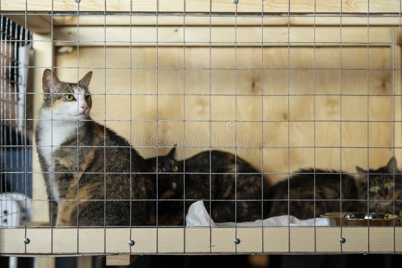 Koty z inteligentnymi, smutnymi oczami przy specjalnej dobroczynno?ci powystawowy patrze? od kratownicy kom?rka, oczekuje one zna zdjęcia stock