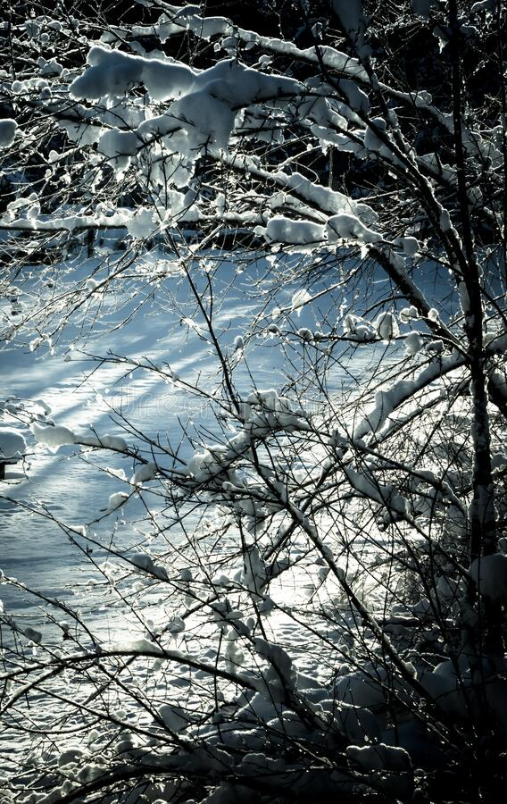 Koude bevroren tuin in de winter royalty-vrije stock afbeeldingen