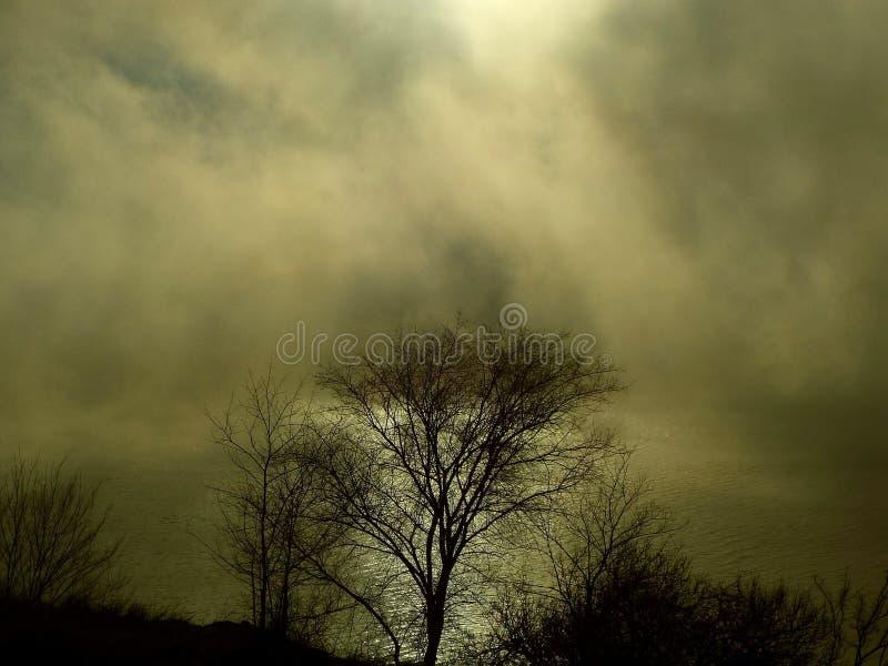 Koude dageraad stock foto's