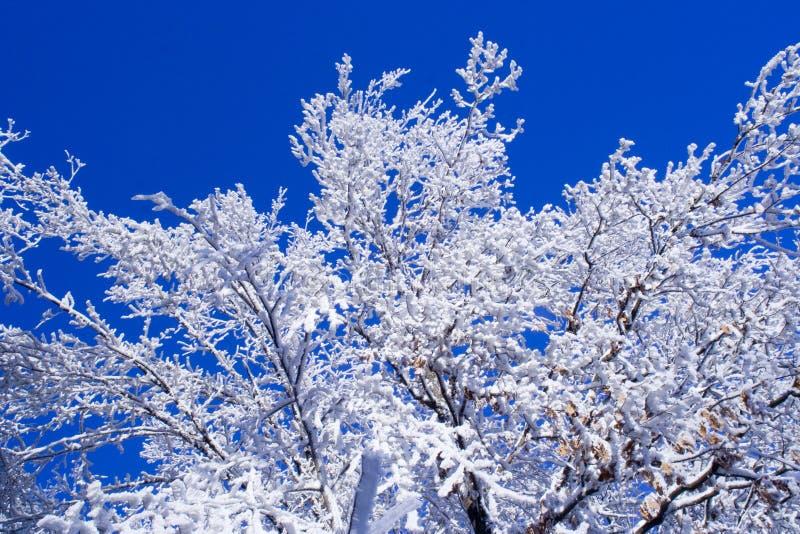 Koude de winterboom royalty-vrije stock afbeeldingen