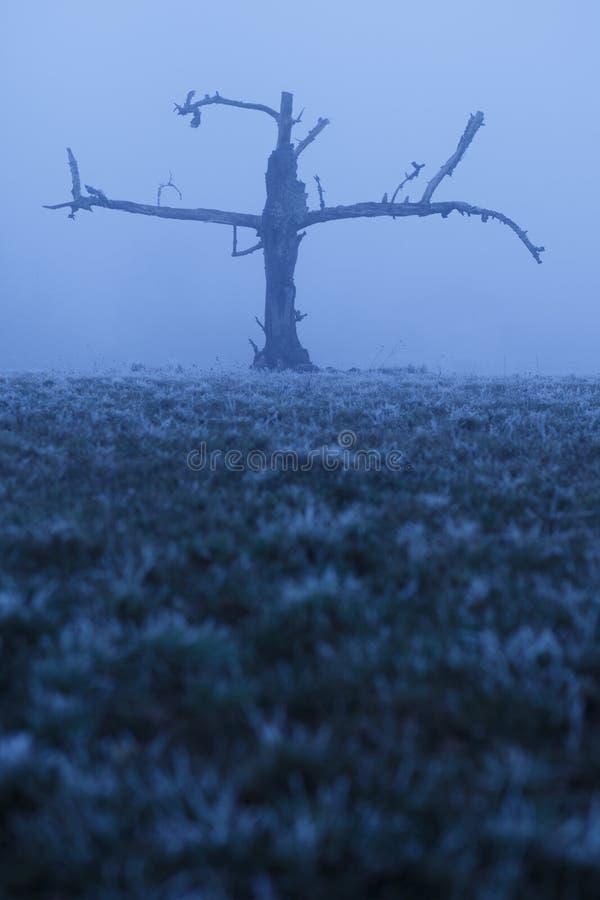 Koude dode boom die op de sneeuw wachten royalty-vrije stock afbeeldingen