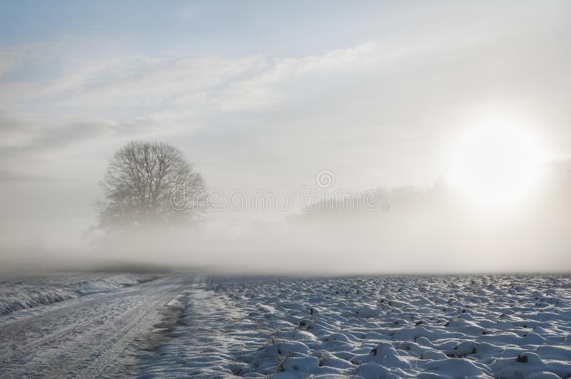 Koude mist over sneeuwweg en boom stock afbeelding
