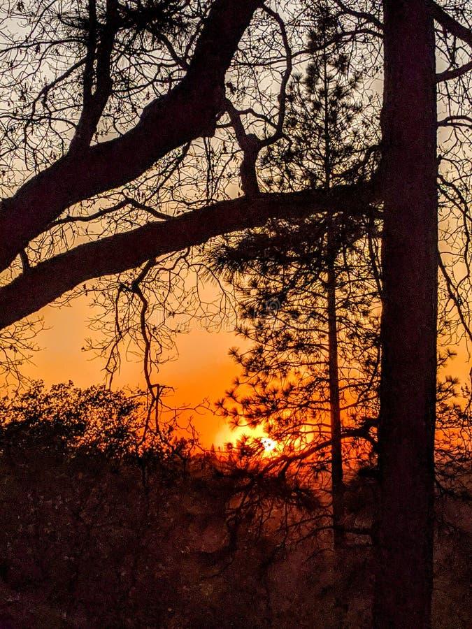 Koude twilight luzy in de winter stock foto's
